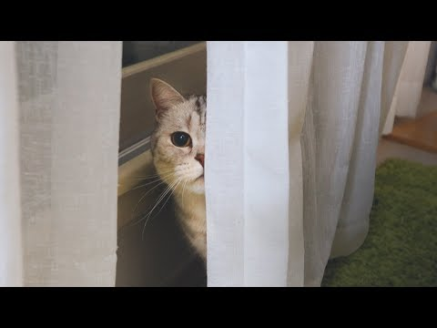 숨바꼭질 천재 고양이
