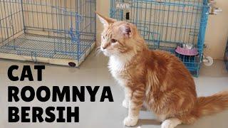 GREBEK CAT ROOM : KETEMU KUCING MAINE COON