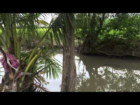 Vietnam Aquaculture Part 2