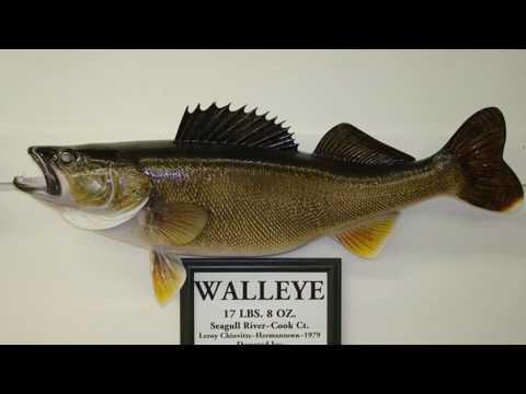 Minnesota State Record Fish.