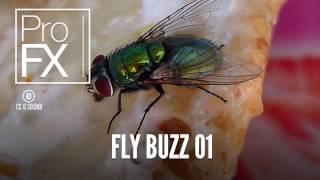 Fly Buzz 01 | Animal Sound Effects | ProFX (Sound, Sound Effects, Free Sound Effects)
