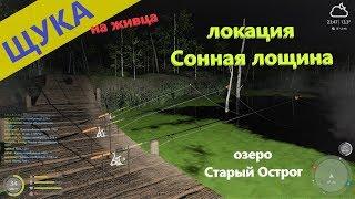 Русская рыбалка 4 озеро Старый Острог Полсадка щук