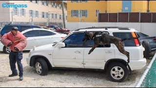 Police dogs train for duty