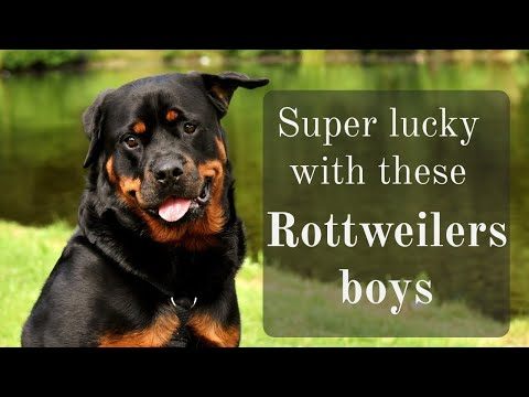 Super lucky with these Rottweilers boys