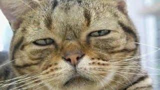 Twitterで人気のおもしろ画像、動物シリーズ。ツイッターでのボケて殿堂...
