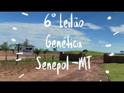 6º Leilão Genética Senpol MT 26/02/2109