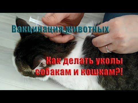 Вакцинация кошек и собак. Как правильно делать уколы животным?!