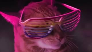 Кошки поют