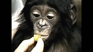 HEBOH!! anak monyet dan cewek ber..