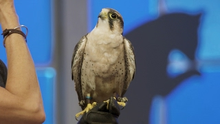 Learn How to Call a Bird of Prey with Anthony Anderson!