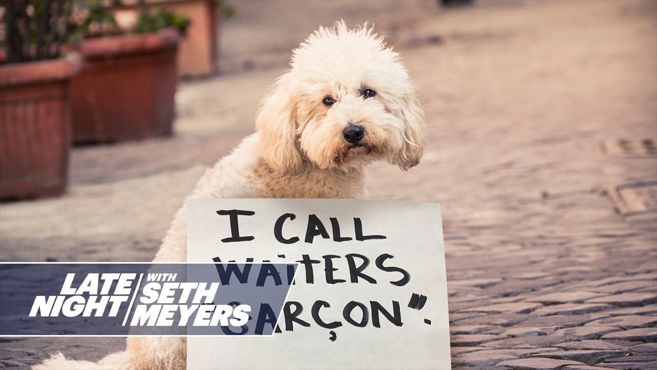 Extreme Dog Shaming: Faking a Disability Claim, Calling Waiters Garçon