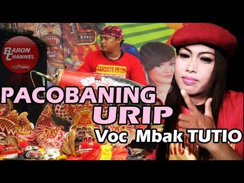 Lagu Jaranan PACOBANING URIP Voc Mbak TUTIO 77 | SAMBOYO PUTRO Live WTP