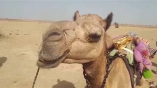 인도 자이살메르 낙타사파리 Jaisalmer | 여자…
