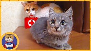 Лечим спасенного и уже не дикого котенка. Имя для котенка
