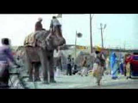 Слон африканский и индийский слон основные различия и