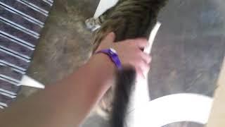 Документальный фильм про кошек (Турция)
