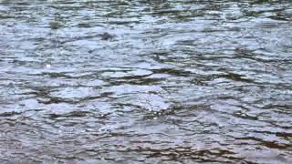 Рыбалка . Семга на  реке  Западная   Лица   .(Ловим семгу на реке Западная Лица ., 2012-05-26T13:01:18.000Z)