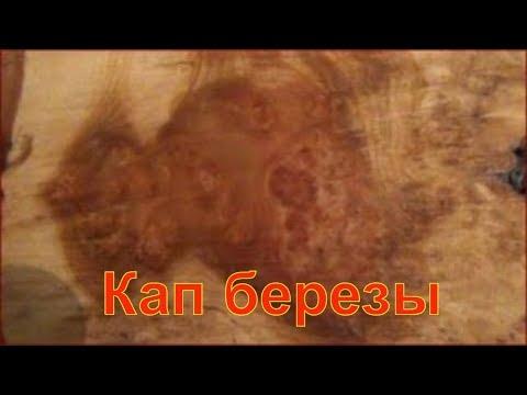 Ольха: лечебные шишечки и царские дрова