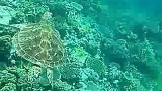 Turtle Thumbnail