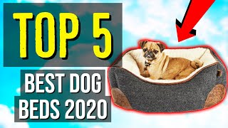 ✅ TOP 5: Best Dog Beds 2020