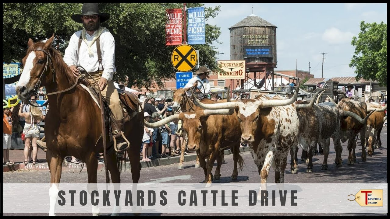 Fort Worth Stockyards Cattle Drive Youtube