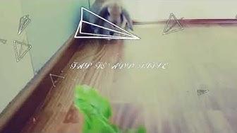 Elämäni eläimet! ~ 1# Stella❤