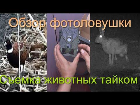 Скрытая камера для животных [ Фотоловушка с WI-FI обзор ] Кадры птиц, зайца