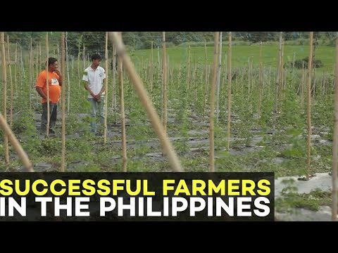 Successful farmers in the Philippines : Vegetable farming | #Agriculture