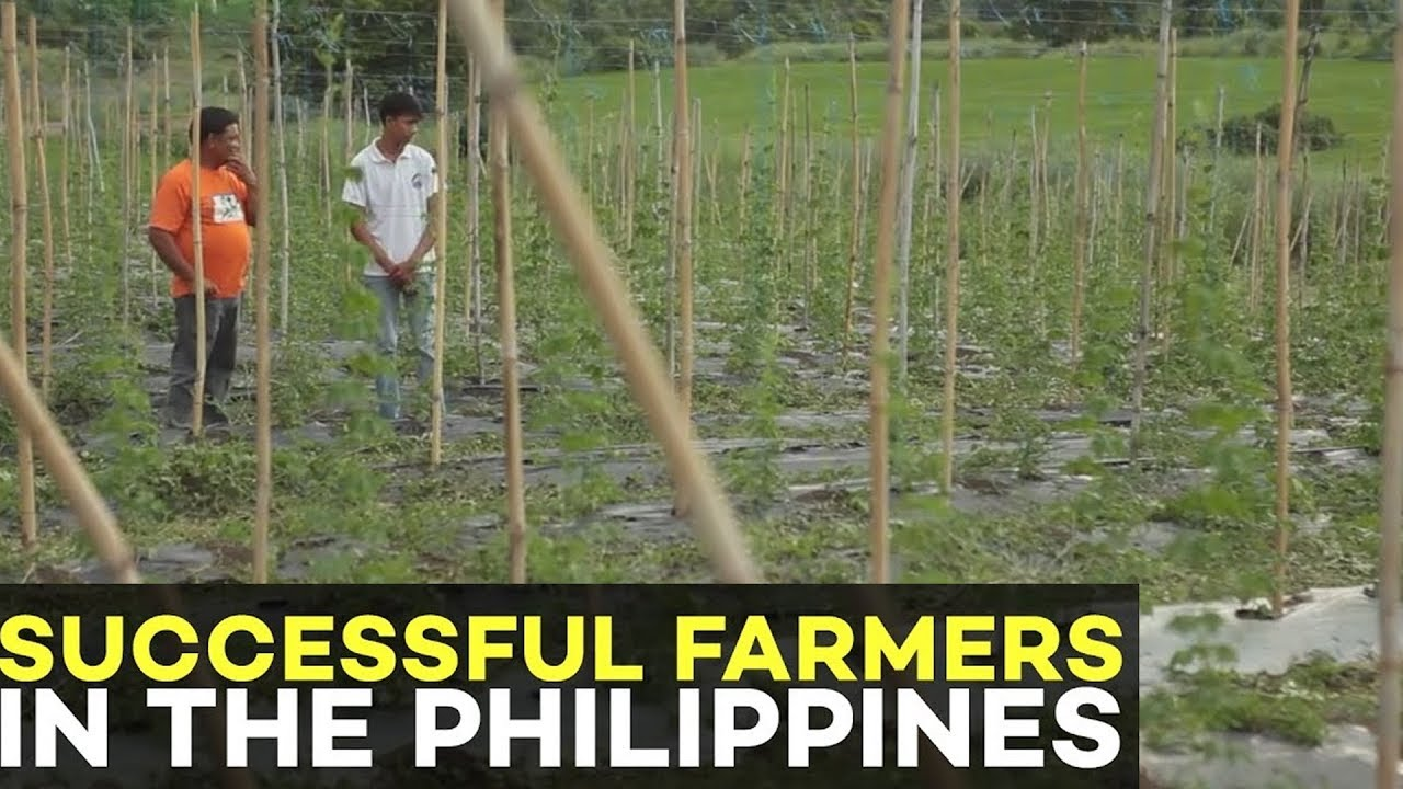 Successful Farmer in the Philippines: What makes Vegetable Farming  Profitable