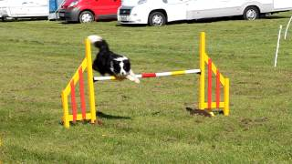 2nd Place Grade 3 Agility With This Run.mov