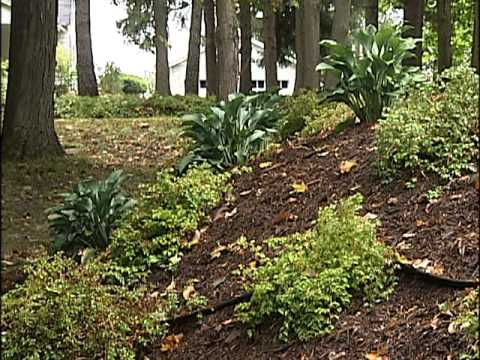 Home Gardener - Slope Landscaping Part II - YouTube