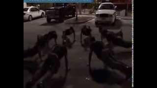 Спецназ Майами / Miami SWAT 2/6