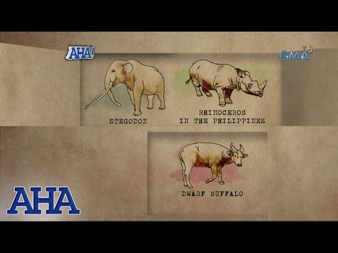 AHA!: Extinct animals in the Philippines