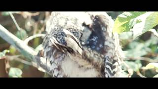 Scary Owl Video That'll Definitely Give You Chills | www.phovid.net