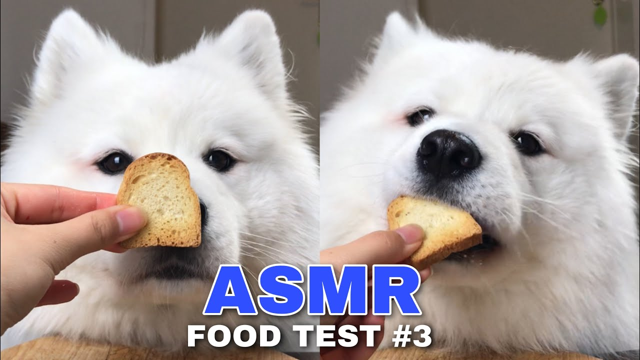 ASMR Dog Reviewing Different Types of Food #3 I MAYASMR