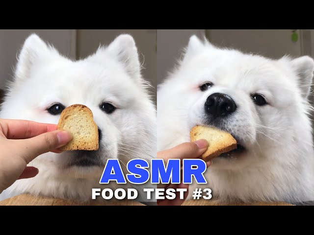 ASMR Dog Reviewing Different Types of Food #3 I MAYASMR