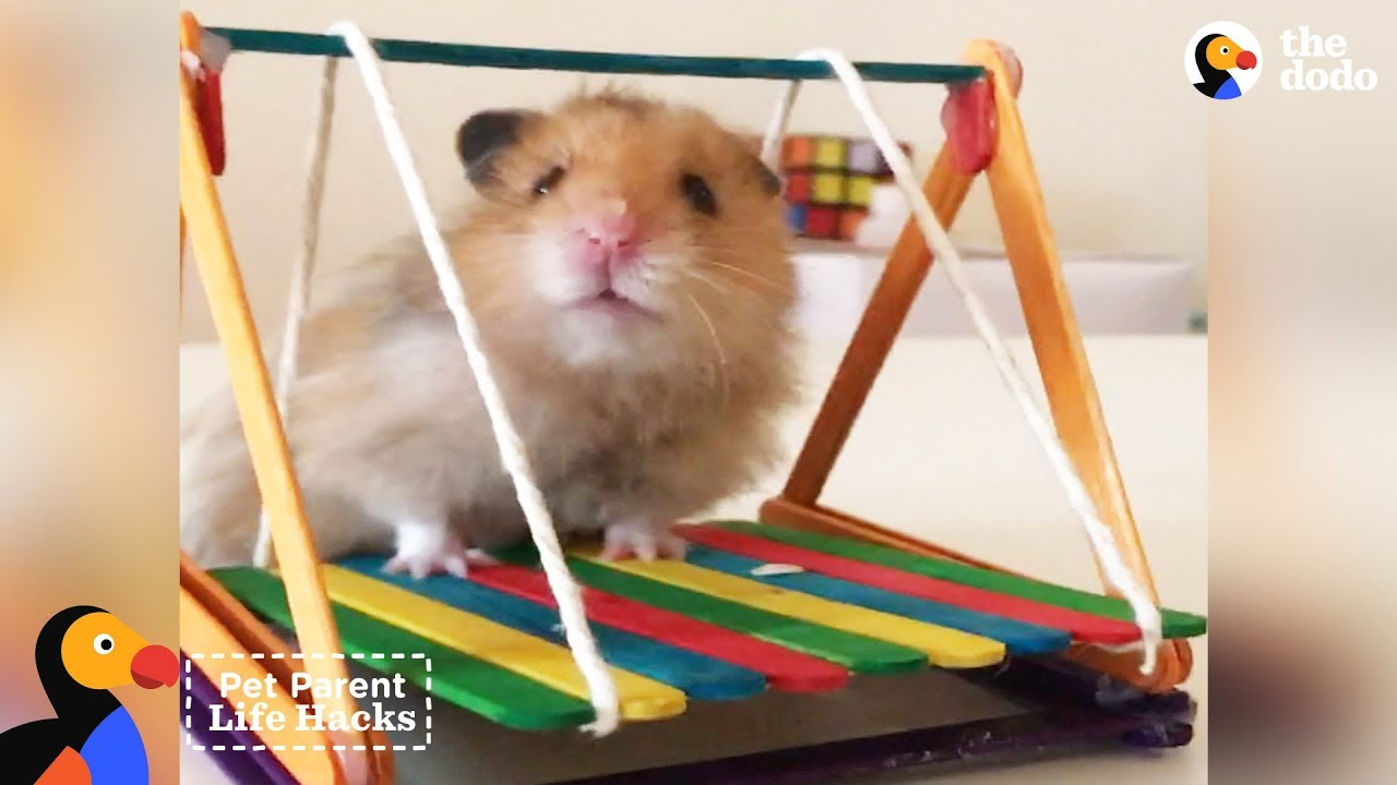 DIY Hamster Swing Set Pet Parent Hacks