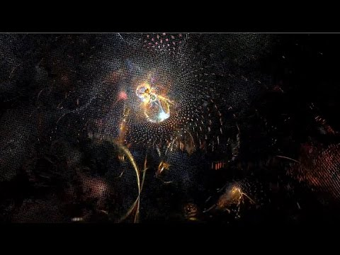 Electric Sheep in HD Psy Breaks Fractal Animation Vol.3