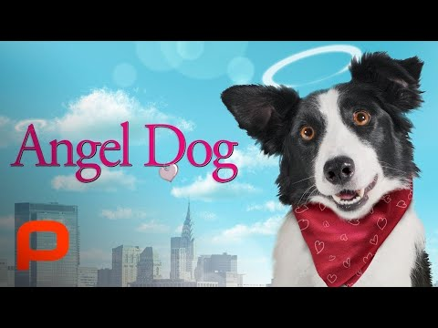 Angel Dog Full Movie dog helps man learn to live again after he loses everything