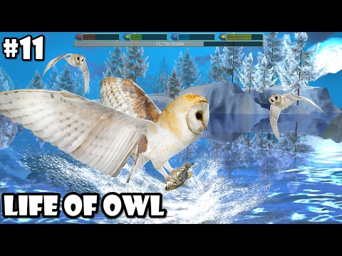 Ultimate Bird Simulator - Life of Owl - Android/iOS - Gameplay Part 11