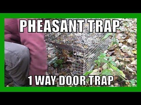 Pheasant Trap (1 way door trap)