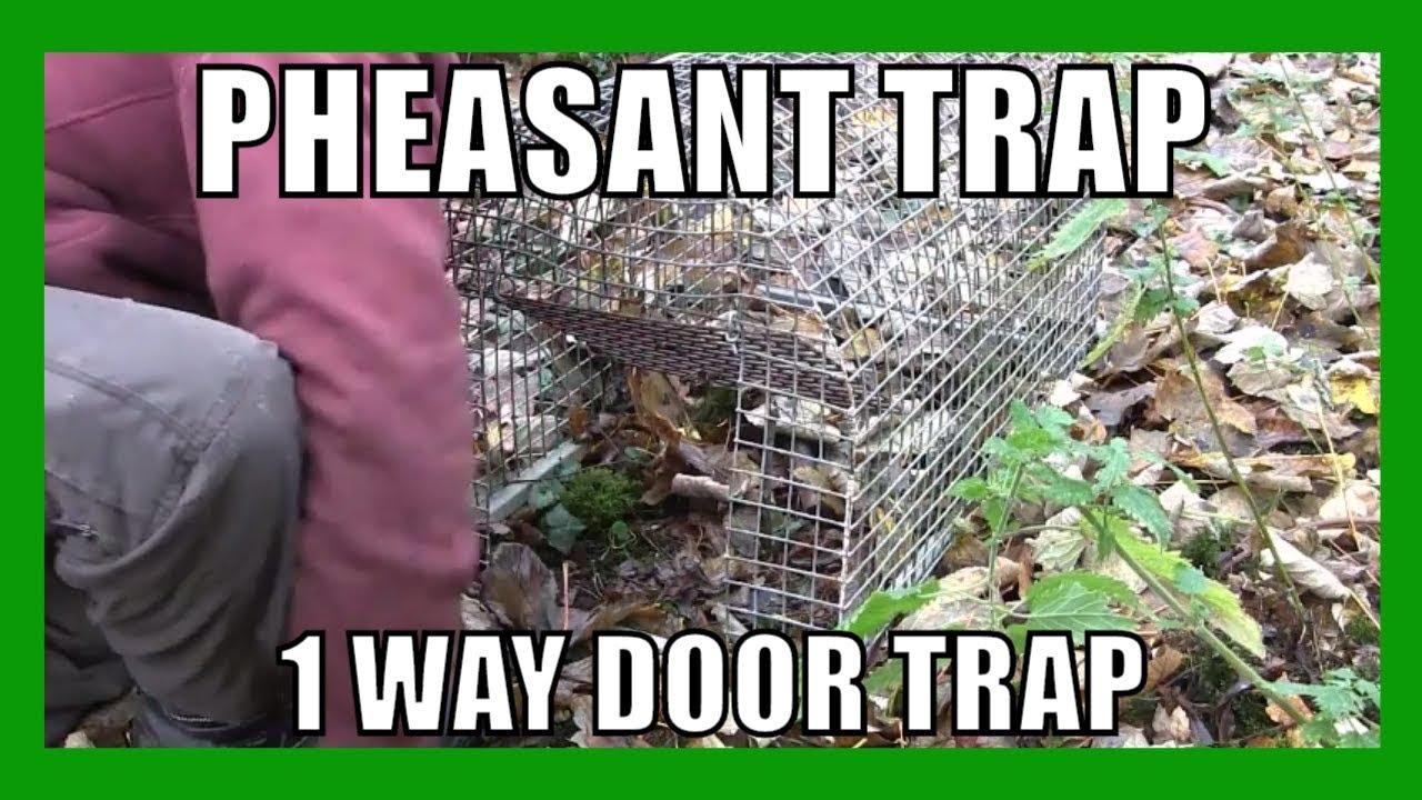 Pheasant Trap (1 way door trap) - YouTube