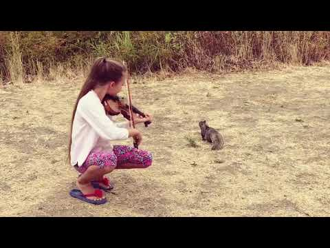 Karolina Protsenko is playing VIOLIN for a little SQUIRREL - Hallelujah Leonard Cohen