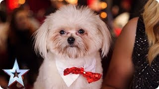 BGT'S DAZZLING DOGS! | Britain's Got Talent