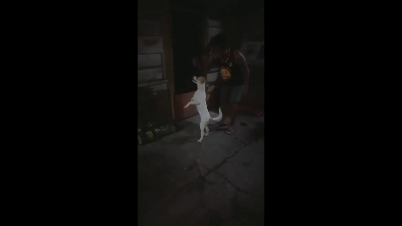 My Dog ❤️😂
