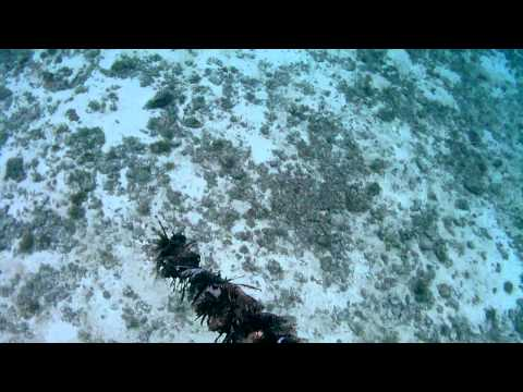 Lionfish genocide caught on tape in Cozumel!