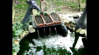 Aquaponics Experiment 01