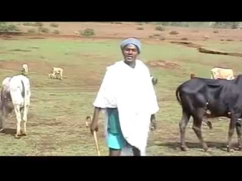 Best Gojjam Song of the Year- 2011 solomon Demissie