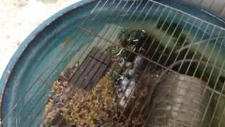 メダカをソーラーポンプで飼っています ソーラーポンプは快調に動作して...