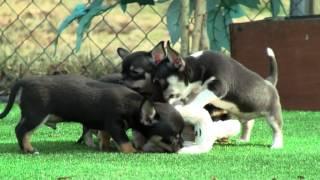 Puppies in the garden 1st March 2012.mpg